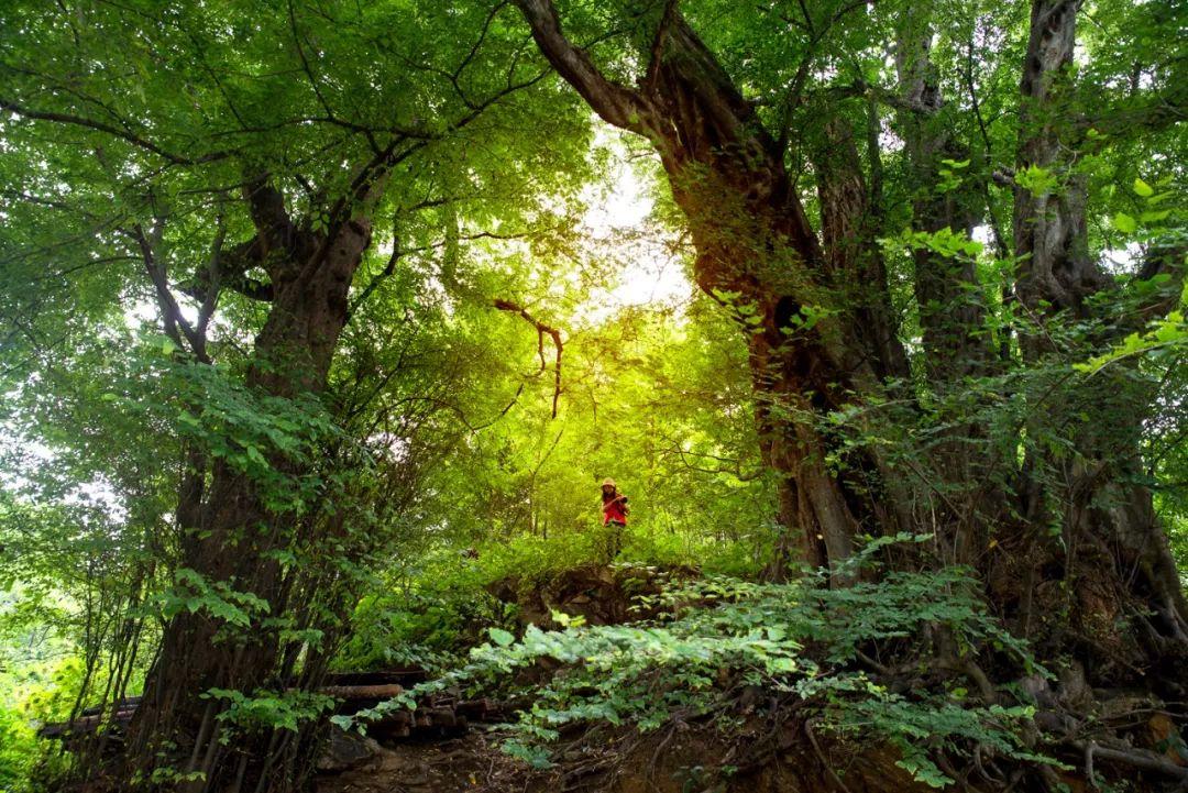 一山举世奇!详解黄冈大别山世界地质公园创建历程